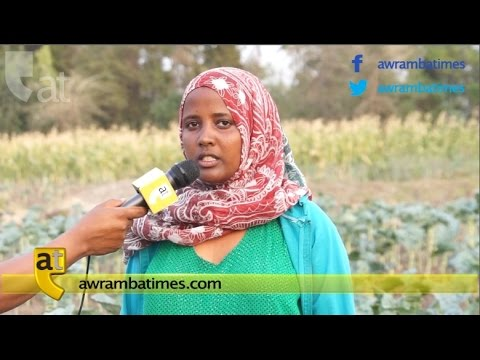 Creating employment and entrepreneurship opportunities for women and youth