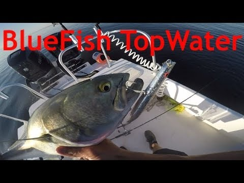 NJ BLUEFISH BLITZ 2019 (TopWater Strikes)