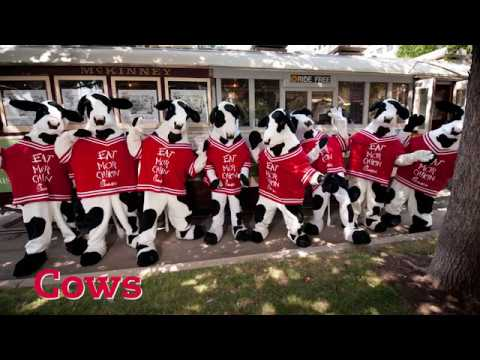 Cow Appreciation Day Show Your Spots and the Love