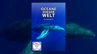Ozeane dieser Welt - Buckelwale