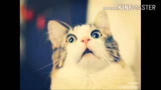 Топ 10 самых популярных пород кошек