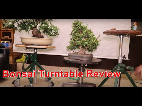 Bonsai Turntable Review - Superfly / Meco, Green T.  Agresta Gardens