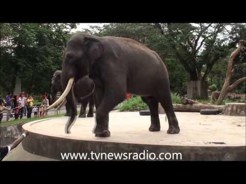 Zoo Negara in Kuala Lumpur Malaysia