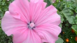 Красивые летние цветы(Красивые летние цветы. Видео можно использовать как ФУТАЖ., 2016-07-07T05:00:00.000Z)