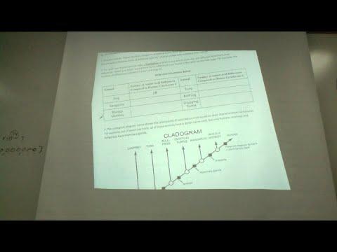 Molecular Biology and Evidence for Evolution