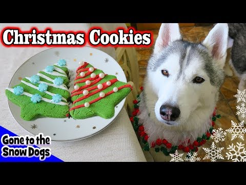 Christmas Cookies for Dogs | DIY Easy Dog Treats Recipe 90