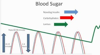 Food and Your Blood Sugar -- Lantus and Novolog - Diabetes Center for Children at CHOP