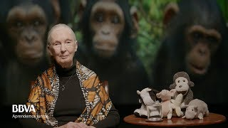 V. O. Complete. Life lessons of an indomitable spirit. Jane Goodall, primatologist