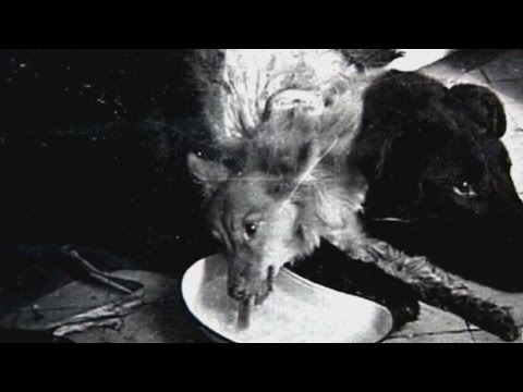 Dog with two heads created in a lab - Shocking secrets of Soviet era thumbnail