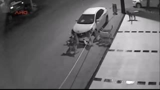 Собаки разломали машину средь темной ночи