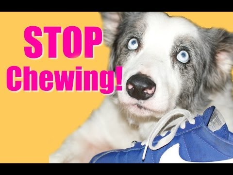 How to Teach Your Puppy or Dog to Stop Chewing!