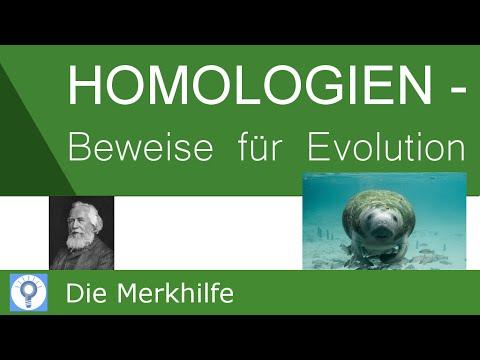 Homologien - Beweise für die Evolution - Ontogenese ...