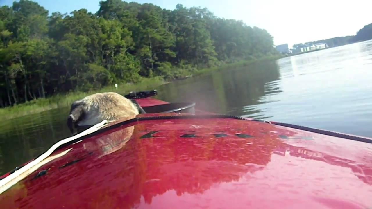 Kayaking With Knishes Around Owl Creek Virginia Beach Va