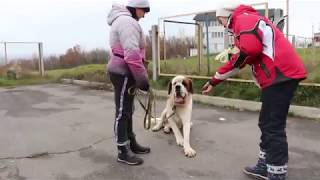 Групповые занятия. Обучение собак не брать еду с чужих рук.