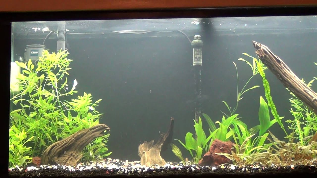 High Ammonia Level In The Planted Aquarium Youtube