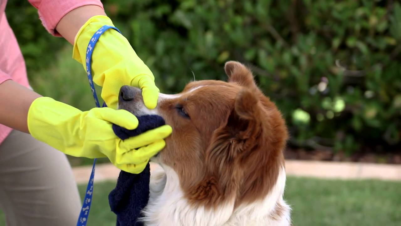 How to Get Skunk Smell Off Your Dog and Yard (Petco)
