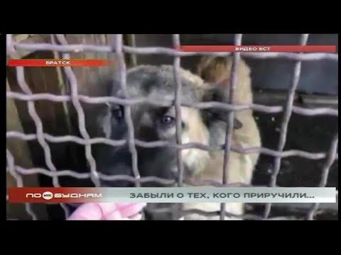 Случаи издевательств над собаками участились в Братске с начала 2020 года