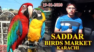 Saddar Exotic Birds Market RD1…