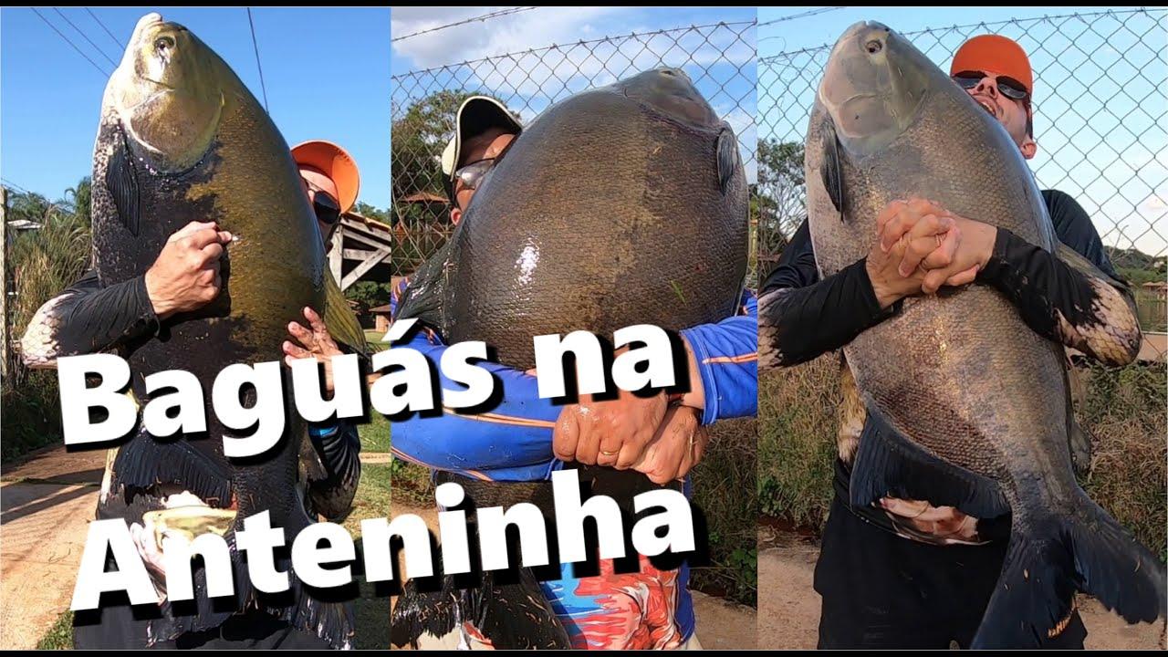 Engenho Velho com GIGANTES na ANTENA - Fishingtur #687
