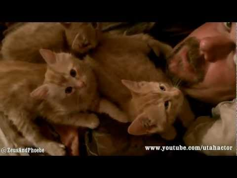 Kittens Are Fuzzy Orange Chest Warmers