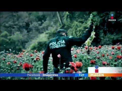 El enorme negocio de las drogas en México | Noticias con Francisco Zea