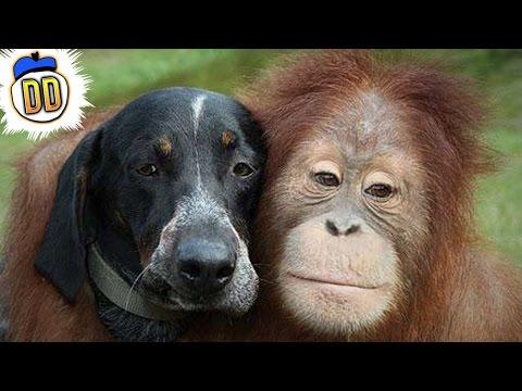 15 Bizarre Animal Friendships