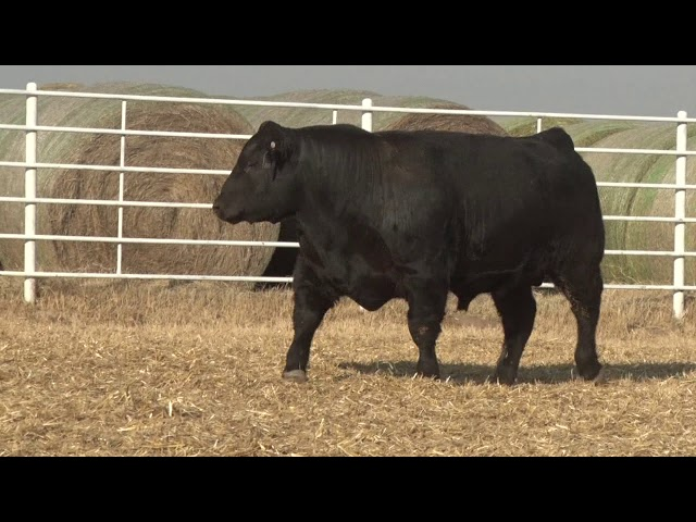 Express Ranches Lot 288