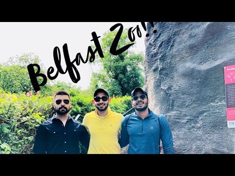 A day at the Belfast Zoo!!