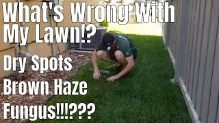 DIY How to diagnose/ Fix lawn dry spots, sod web worms, cut worms, fungus. What's wrong with my lawn