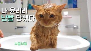 리리의 냥빨하는 날! 심통난 표정에 세상얌전한 목욕 에티튜드!! (고양이 목욕시키기)