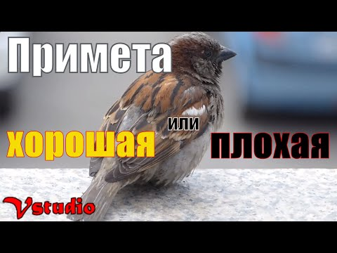 Птица залетела в окно - примета хорошая или плохая / Vstudio