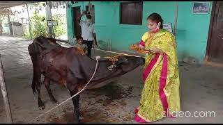 COVID 19-Distributed feed to 700 cows in Kothagudem,Bhadrachalam