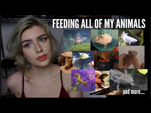 Thumbnail: FEEDING ALL OF MY ANIMALS (Yes, I Do This Every Day)