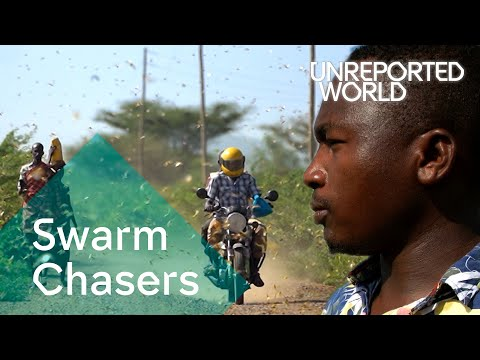 Swarm Chasers | Unreported World