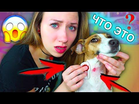 Вопрос: У собаки круглое розовое пятно на шее это лишай или нет?