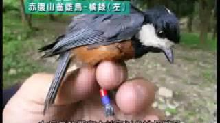 01赤腹山雀的巢箱生活 育雛篇