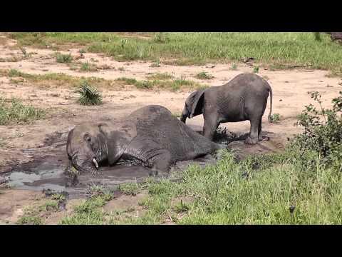 Safari in Tarangire National Park Tanzania February 2013