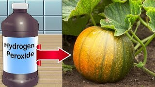 8 Surprising Reasons To Use Hydrogen Peroxide in Your Garden