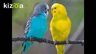 Урок 2 для попугая. Кеша хороший
