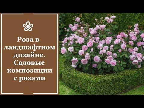 ❀ Роза в ландшафтном дизайне. Садовые композиции с розами
