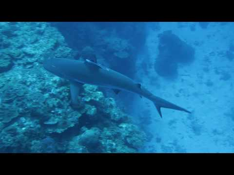 Diving in Colombia - Providencia Island and San Andres