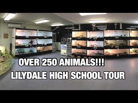 OVER 250 ANIMALS?!? (Lilydale high school tour)