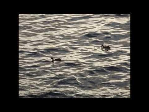 Norway: Hordaland & Sognefjord & Rallarvegen