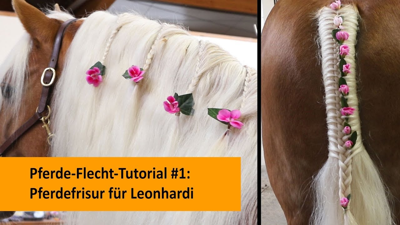 Pferde Flecht Tutorial 1 Mähnen Und Schweiffrisur Für Leonhardi