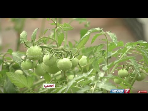Tips for Creating Kitchen Garden on the Terrace | Poovali | News7 Tamil