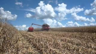 case ih axial flow 7120 colheita de milho no parana safra 2013 2014