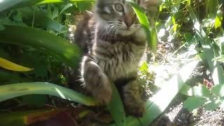 Прикольный котёнок играет на улице с кошкой-мамой и травой.