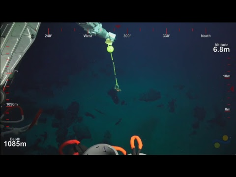 ROV SuBastian Dive 068 - Unnamed Seamount- Deep Sea Corals of PIPA