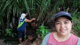 UNEXPECTED BLESSINGS FROM SAN DIEGO CALIFORNIA 🙏 | PAGTATABAS NG DAMO / buhay probinsya vlog#59