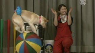 Цирк «Гав-гав» учит любить бездомных собак
